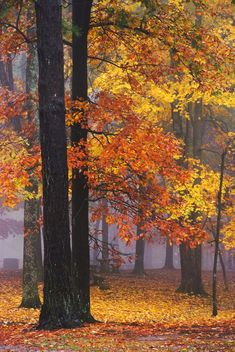***Autumn in a foggy park (Huntsville, Alabama) by Wes Thomas