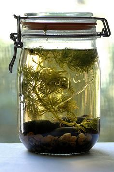Tabletop Biosphere; I want one of these in my dorm!