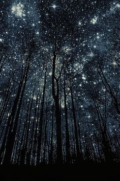 sky, night skies, tree, stars, forest