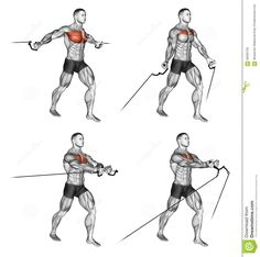 Exercising. Middle And Low Cable Fly Stock Illustration - Image: 66935758