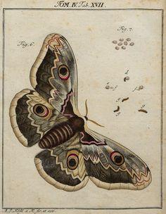 de oruga a mariposa.