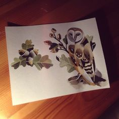 Sasha Unisex, acorns and barn owl.