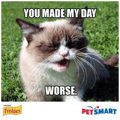 Create a grumpy greeting! Plus, you could win a trip to meet Grumpy Cat and a year's supply of Friskies®. Visit apps.facebook.com/petsmartfriskies to share your own e-card and to enter the sweepstakes. #friskies #eatandgreet NO PURCHASE NECESSARY. See Official Rules for details.