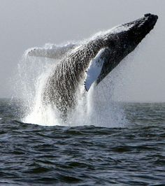 That is truly an awesome sight. Off Hook Head, Co Wexford, Ireland