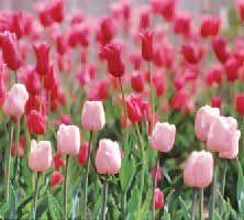spring flowering - Google Search