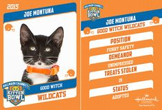 hallmarks kitten bowl 2015 | ... Exclusive: Introducing the furr-ocious competitors of Kitten Bowl II