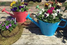 Create a colorful basket or container for spring, Wed., March 23, 3-6 p.m. Choose a variety of young plants (we have a greenhouse full), pick a spot in our customer planting area, get your hands in our luscious potting soil and plant away!  Once your spring container is finished you can either take it home with you or leave it at our greenhouse and we'll give it all the love and attention (and water, of course)  it needs.  We will care for your lovely creation until Saturday, May 23.