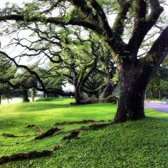 """See 2376 photos from 15250 visitors about scenic views, gardens, and fresh air. """"A beautiful green lung of Taiping. Lake Garden, Taiping, Places To Go, Landscape, Plants, Scenery, Plant, Corner Landscaping, Planets"""