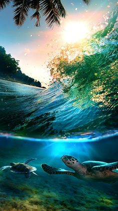 Tartarugas Environment, Planets, Waves, Sea, Lighting, Outdoor, Turtle, Nature, Outdoors