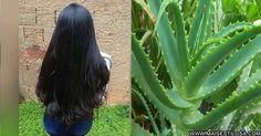 Como engrossar encorpar os cabelos com babsa
