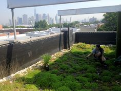 Rooftop garden designed by Greenery NYC