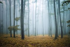 Misty Morning Forest Wall Mural, custom made to suit your wall size by the UK's No.1 for murals. Custom design service and express delivery available.