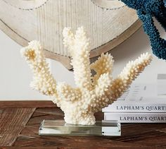 glass based coral stands pottery barn