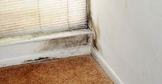Sprøjt denne olie i hjemmet – undgå problemer med skimmelsvamp for altid Remodeling Mobile Homes, Home Remodeling, Family Planner, Wet Spot, Wet Floor, Trailer Remodel, Diy Flooring, Home Hacks, Cleaning Hacks