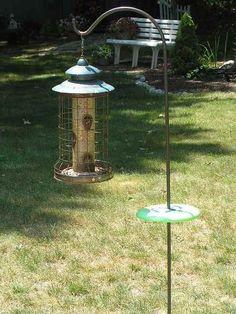 Bird Gardens How To Attract Beautiful Wild Birds Into