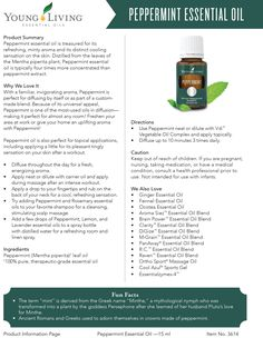 Peppermint oil is a sweet, cool oil that has a wide variety of benefits. Learn more about the pure therapeutic-grade peppermint essential oil uses. Young Living Oils, Young Living Essential Oils, Peppermint Essential Oil Uses, Young Living Peppermint, Yl Oils, Healing Oils, Hand Scrub, Essentials, Oil Benefits