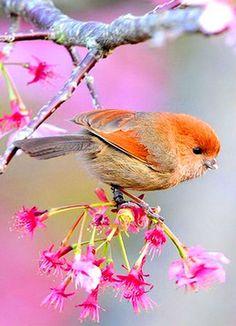 Brilliant -> Little Birds Game Of Thrones Quotes ; Kinds Of Birds, All Birds, Cute Birds, Pretty Birds, Little Birds, Beautiful Birds, Animals Beautiful, Cute Animals, Exotic Birds