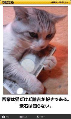吾輩は猫だけど諭吉が好きである。漱石は知らない。