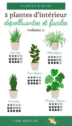 5 depolluting indoor plants – vol. 1 – little girl rooms Ficus Elastica, Garden Plants, Indoor Plants, Eco Garden, Indoor Gardening, Decoration Plante, Home Organisation, Plantar, Green Life