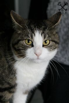 A little darker than Gumby - who has a sweeter face than this cat.  (But otherwise, they could be twins)