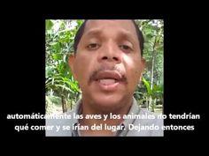 ▶ La deforestacion y biodiversidad - YouTube