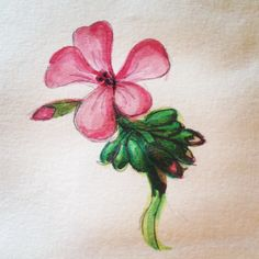 Geranium #sketchbook Geraniums, Tattoos, My Style, Flowers, How To Make, Tatuajes, Tattoo, Floral, Royal Icing Flowers