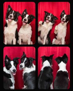 Pet Photobooth ~ When you're truly feelin' yourself.