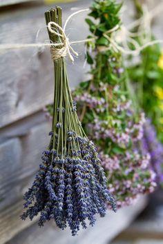 mint + woods + lavender scents