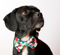 Colorful Cubes Dog Bow Tie Collar.