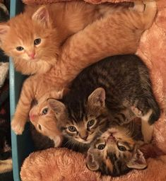 Cuddle 500 Kitties At This Cat Sanctuary In Hawaii - We Love Cats and Kittens