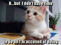 Well just what took up all your time?... can't you tell me? o.k.! I was busy napping !!!!