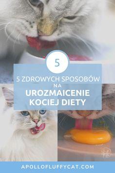 Czy masz swoje ulubione danie, które mógłbyś jeść bez przerwy? Ja mogłabym jeść pizzę! Wszyscy wiemy, że monotonna dieta nie jest zdrowa. Koty, podobnie jak i ludzie, potrzebują różnorodności w swojej diecie. Dzięki tym 5 prostym wskazówkom urozmaicisz dietę swojego kota i zapewnisz mu najważniejsze składniki odżywcze. Diet