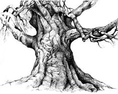 Tree Trunk Detailed Drawing | Wakefield, RI - We lost a tree last week, a true heritage tree, a ...