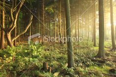 Sun Rising in Green Forest Royalty Free Stock Photo