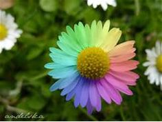 ... images Rainbow flowers HD wallpaper and background photos (32177469