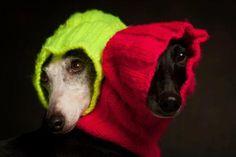paul croes animal photography - Hľadať Googlom