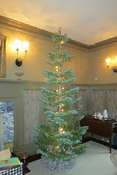 the needles have a greenblueish tint with silvery tips silver tip firs at martha stewarts these trees have a beautiful - Silvertip Fir Christmas Tree