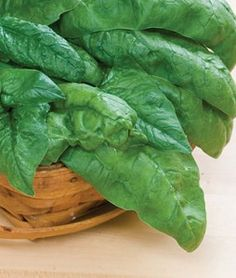Spinach Bloomsdale Long Standing | Garden Seeds and Plants