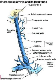 Anatomy of jugular vein
