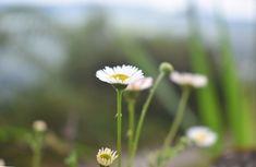 Standing Beautiful Wild Flowers