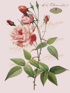 ROSES Pink Red Pierre-Joseph Redoute VINTAGE Flower Garden Art- Printable Download Collage Paper Crafts Card Decoupage No. 7. $2.00, via Etsy.