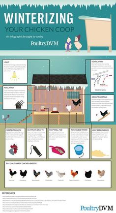 Chicken Coop - PoultryDVM - Winterizing your Chicken Coop Infographic Building a chicken coop does not have to be tricky nor does it have to set you back a ton of scratch. Chicken Barn, Chicken Coup, Chicken Life, Chicken Runs, Chicken Coop Winter, Backyard Chicken Coops, Backyard Farming, Chickens Backyard, Urban Chicken Coop