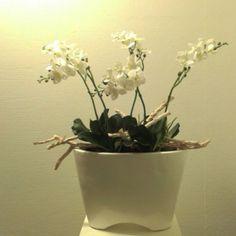 Vensterbank decoratie met crème natuurgetrouwe Orchideeën