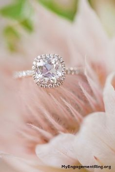 sweet engagement ring - My Engagement Ring