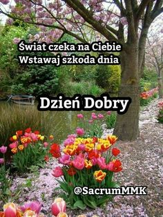 Beautiful Gif, Good Morning, Diy And Crafts, Humor, Pictures, Facebook, Messages, Therapy, Learn Polish