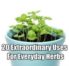 20 Extraordinary Uses For Everyday Herbs - Amazing Herbs and Oils