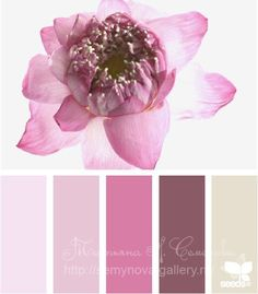 Gallery.ru / Фото #125 - сочетание цвета оттенки сирени и фиолетового - semynova