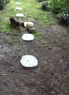 Cute Little Animals, Cute Funny Animals, Funny Dogs, Cute Dogs, Cute Animal Videos, Funny Animal Pictures, Animal Antics, Cool Pets, Pet Birds