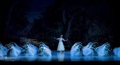 The Wilis in Act 2 of the Mikhailovsky Ballet's Giselle. Photo by Jack Devant
