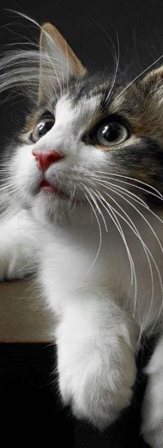 I just can't resist these beautiful kitty close-ups!!!